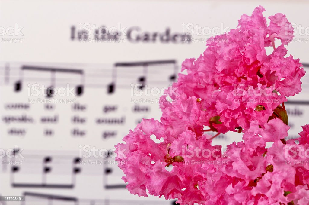 Religious: Crape or Crepe Myrtle Flowers with Hymn stock photo