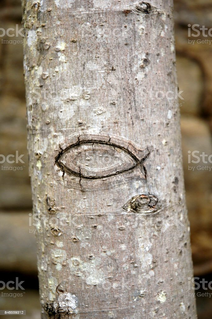 Religious Fish Symbol Carved in Tree stock photo