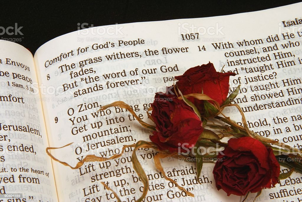 Religious: Isaiah 40:8 Bible Scripture with dried red roses stock photo