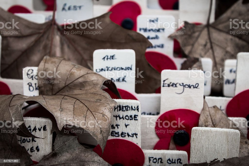 Remembrance Day Poppies stock photo