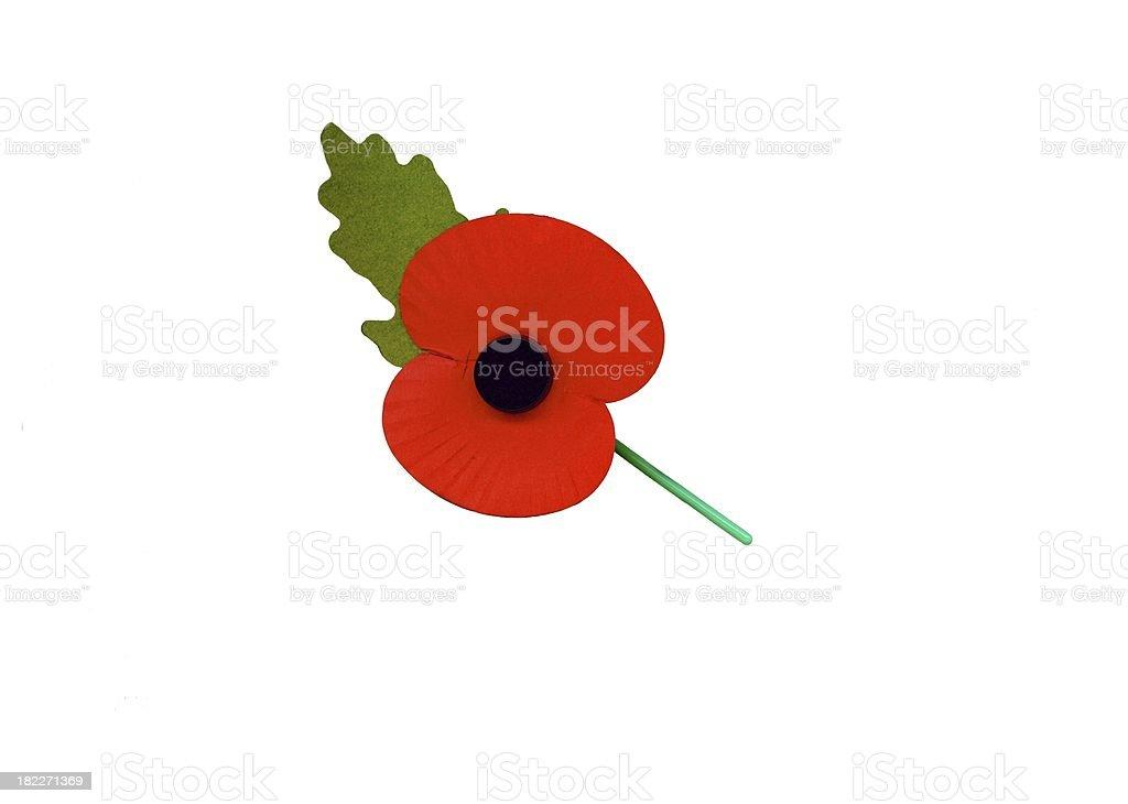 remembrance day poppy stock photo
