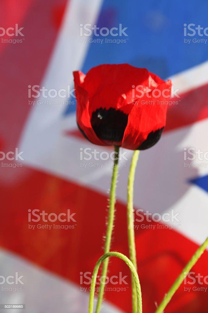 Remembrance Day Poppy. stock photo
