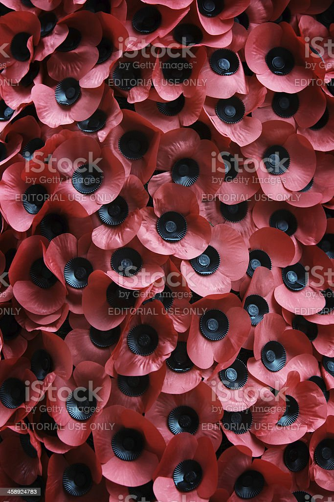 Remembrance Day: Red Poppies stock photo