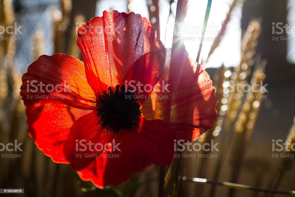 Remembrance. stock photo