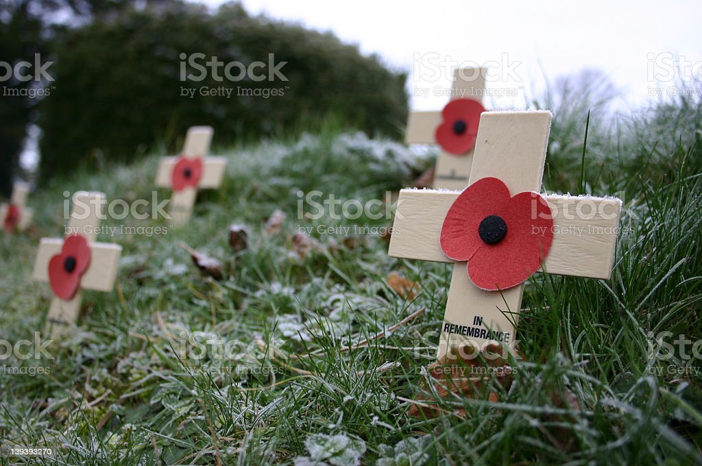 Remembrance Poppies on Frosty Grass Bank stock photo