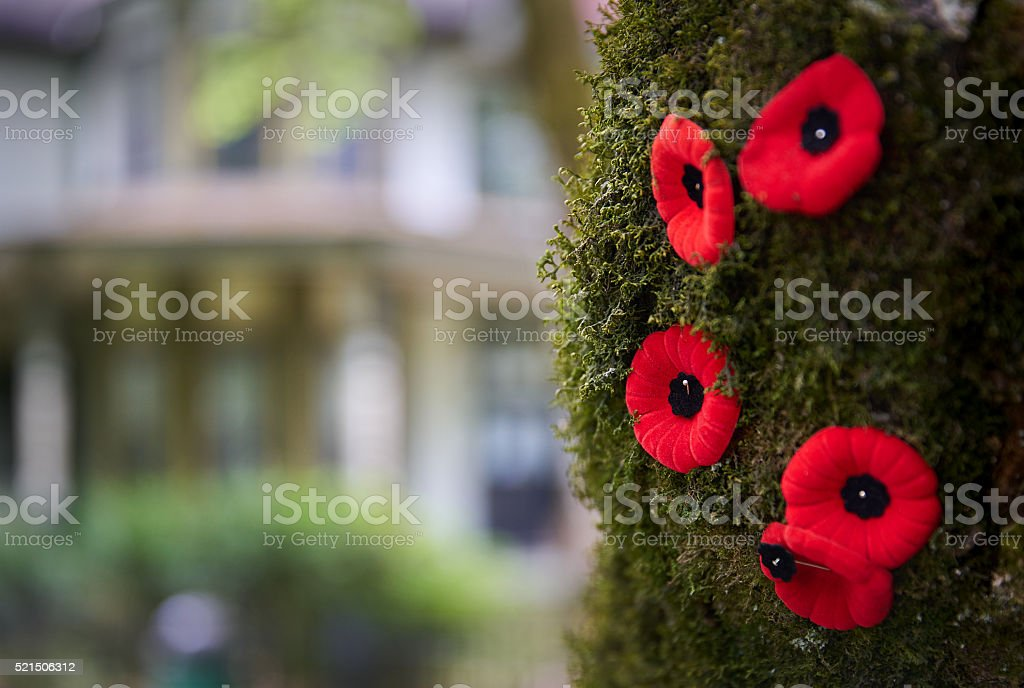 Remembrance Poppies stock photo