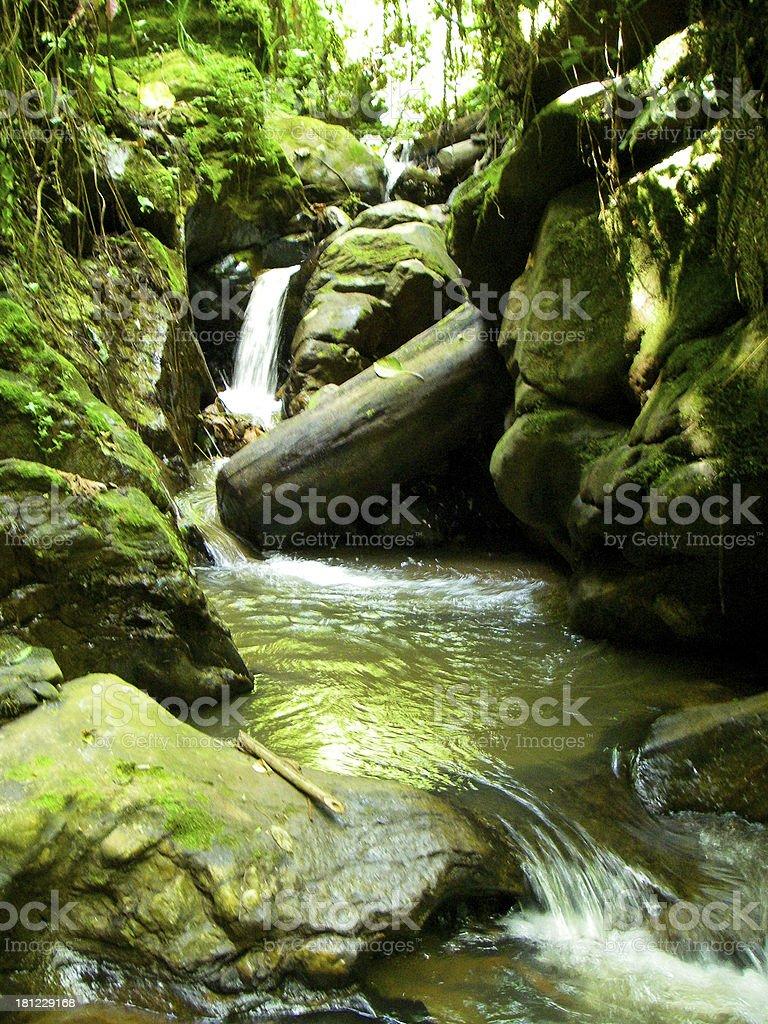 Remnant Gishwati Forest Preserve Conservation Park stream vegetation Rwanda royalty-free stock photo