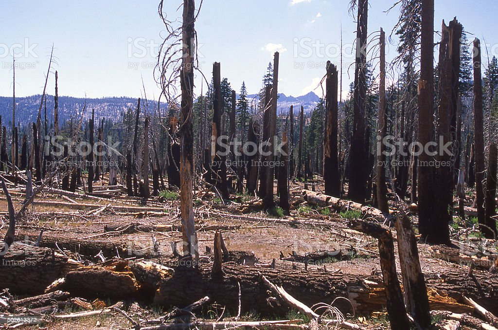 Remnants forest fire Sierra Nevada Mountains near Tuolumne Meadows California stock photo