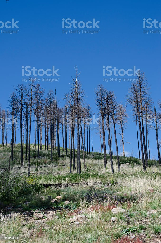 Remnants of a Forest Fire stock photo