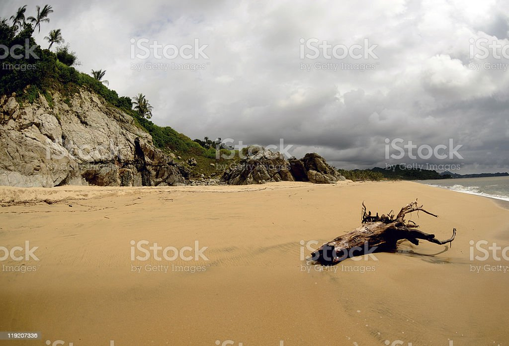 Remnants of a Tree royalty-free stock photo