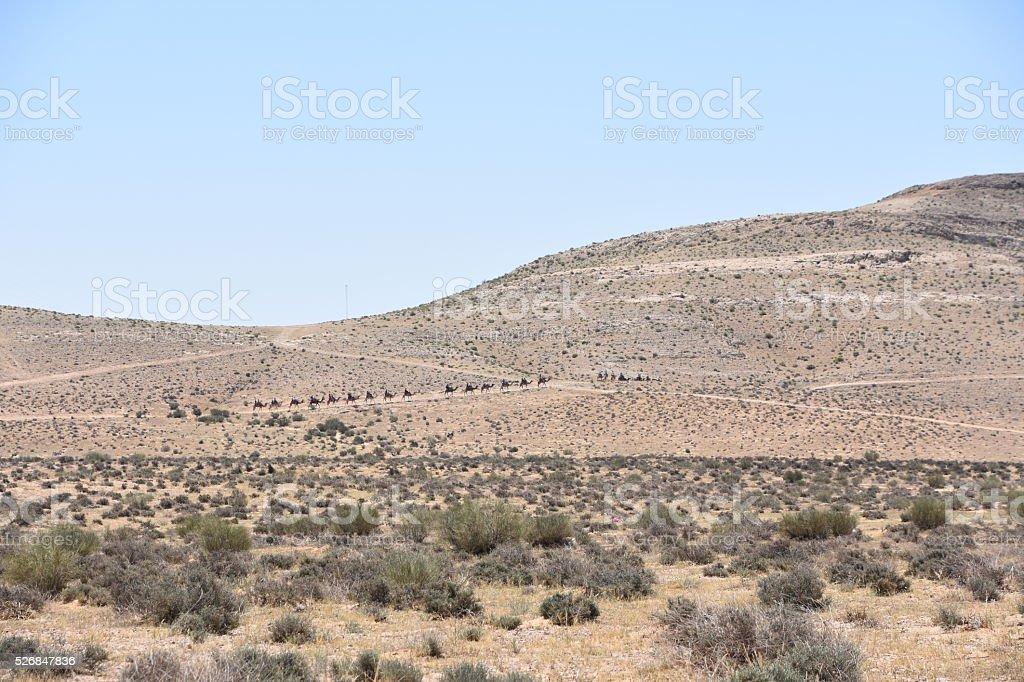 Remote camel caravan in the desert stock photo