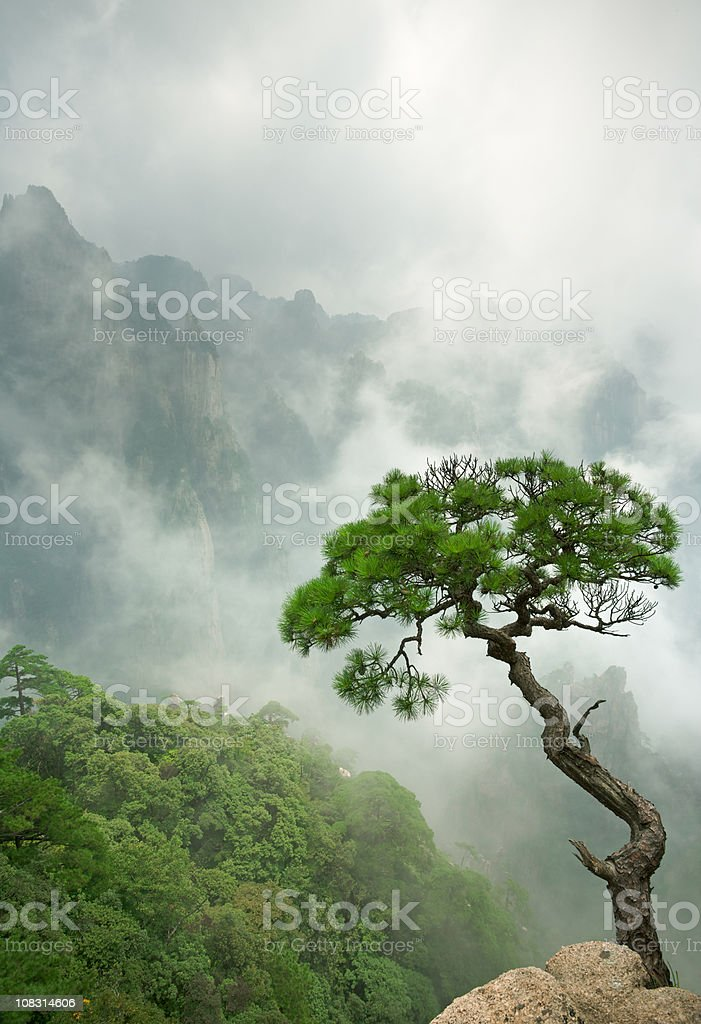 Remote single Huangshan Pine stock photo