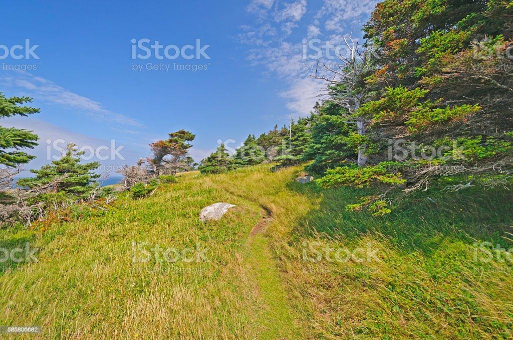 Remote Wind Blown Trail on an Ocean Coast stock photo