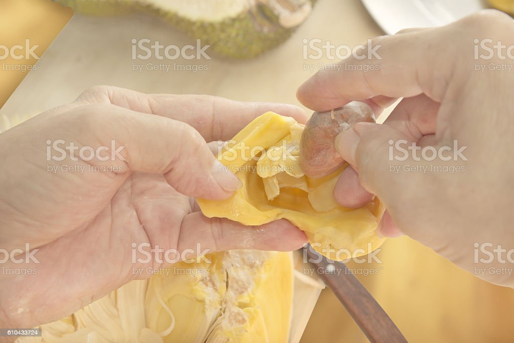 Removing a seed out of Jackfruit stock photo