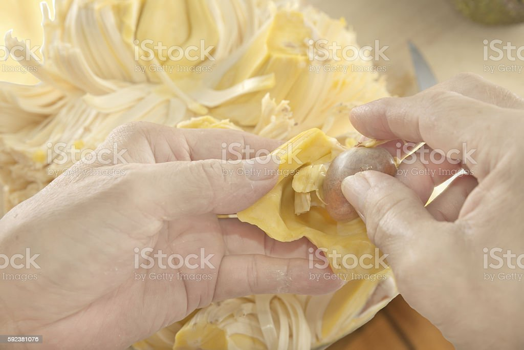 Removing seed out of Jackfruit stock photo