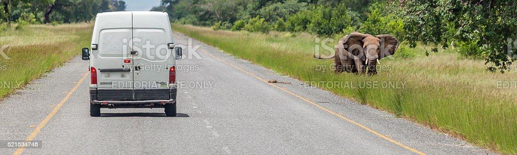 Renault Master Van passes Elephant; Kasane Transit Route, Chobe_N.P., Botswana stock photo