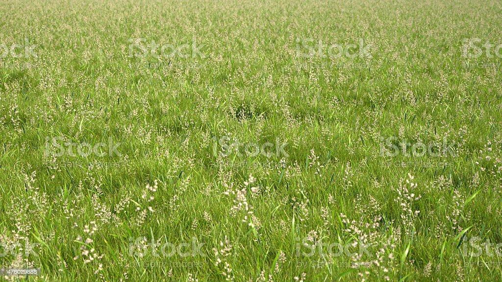 Rendu 3D grass field photo libre de droits