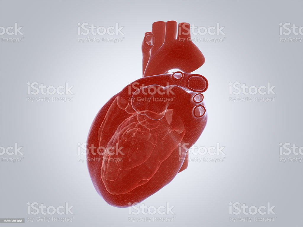 3D render of the human heart. stock photo