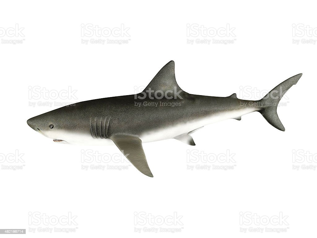 3D render shark stock photo