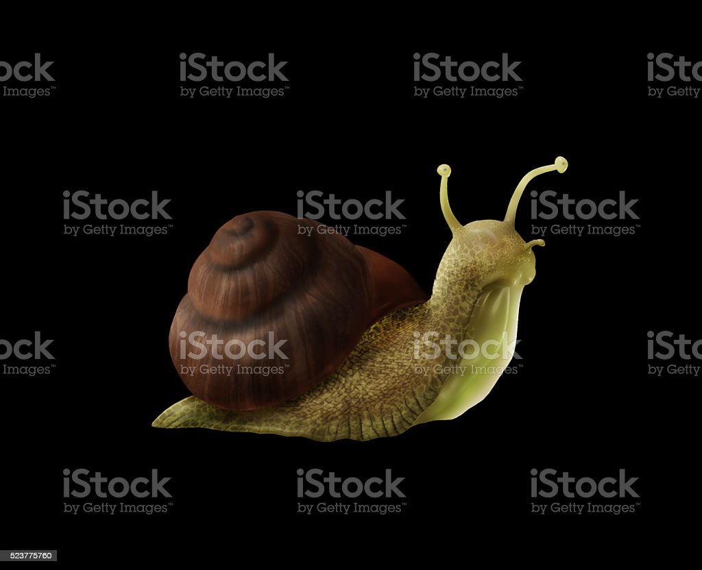 3D rendered snail stock photo