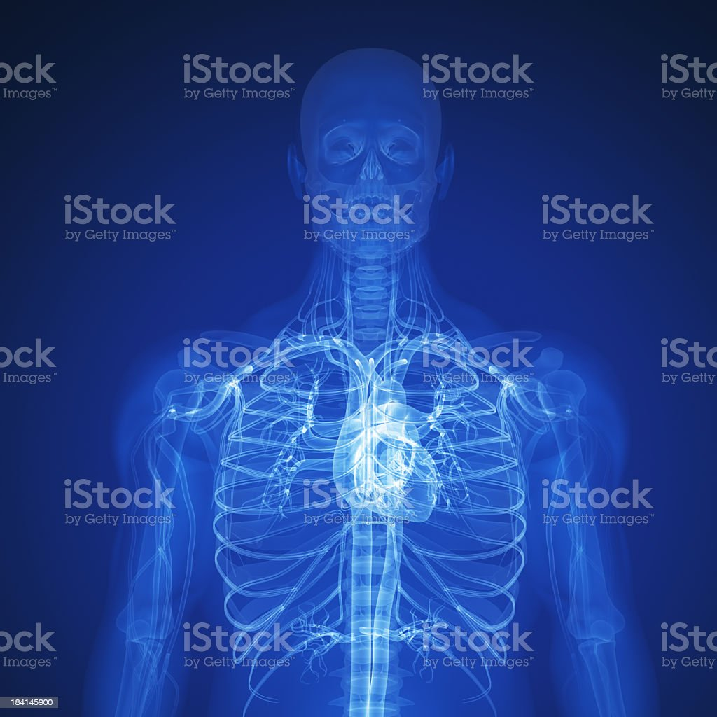 Rendered X-Ray of the top half of a human skeleton and heart stock photo