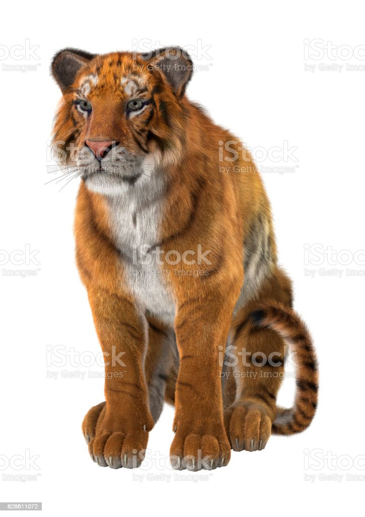3D Rendering Big Cat Tiger on White stock photo