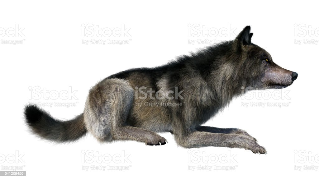 3D Rendering Gray Wolf on White stock photo