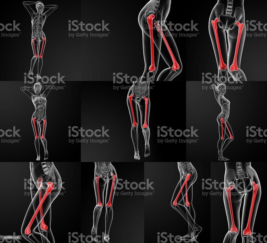 3D rendering illustration of the femur bone stock photo