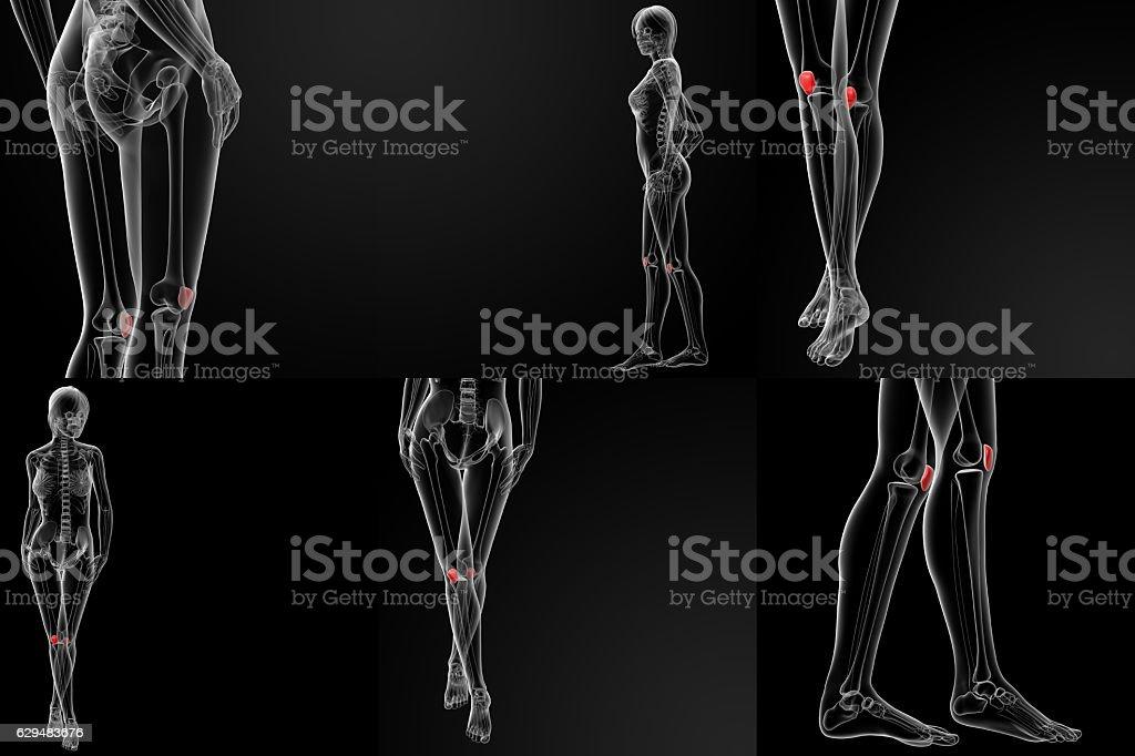 3D rendering illustration of the  patella bone stock photo