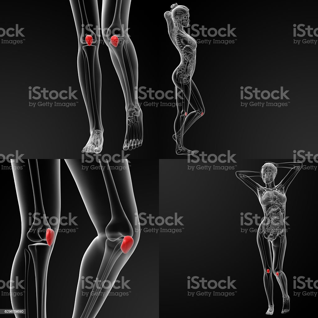 3D rendering illustration of the  patella bone stock photo