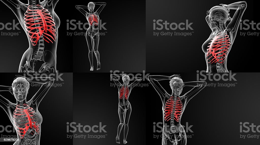 3D rendering illustration of the ribcage bone stock photo