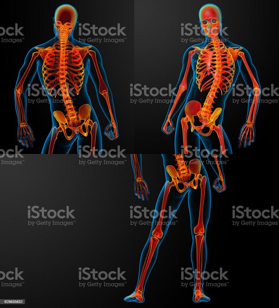 3D rendering of skeleton stock photo