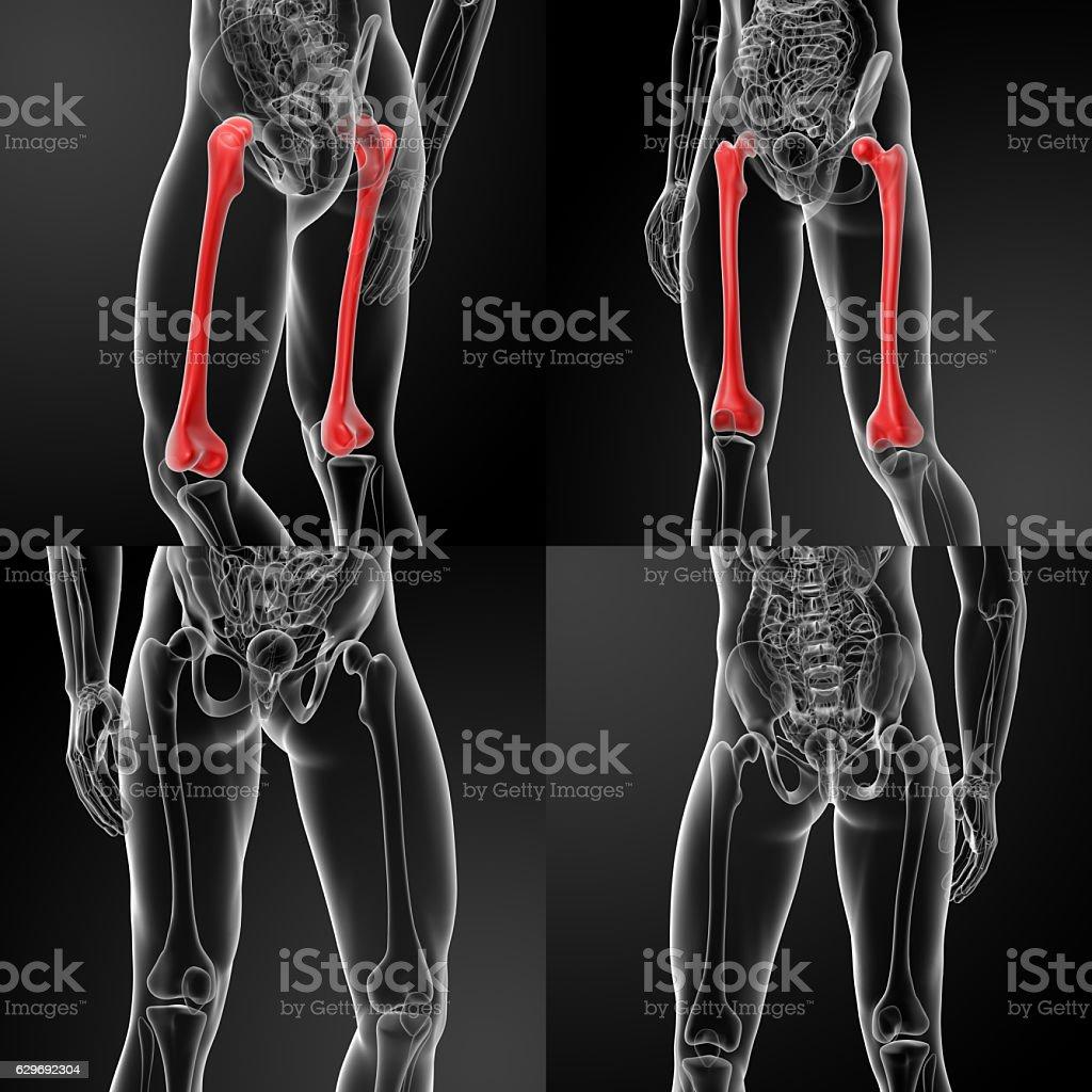 3D rendering of the femur stock photo