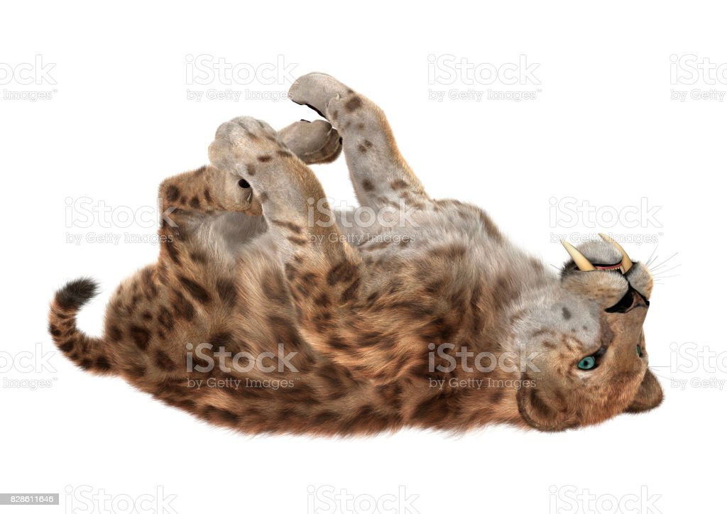 3D Rendering Saber Tooth Tiger on White stock photo