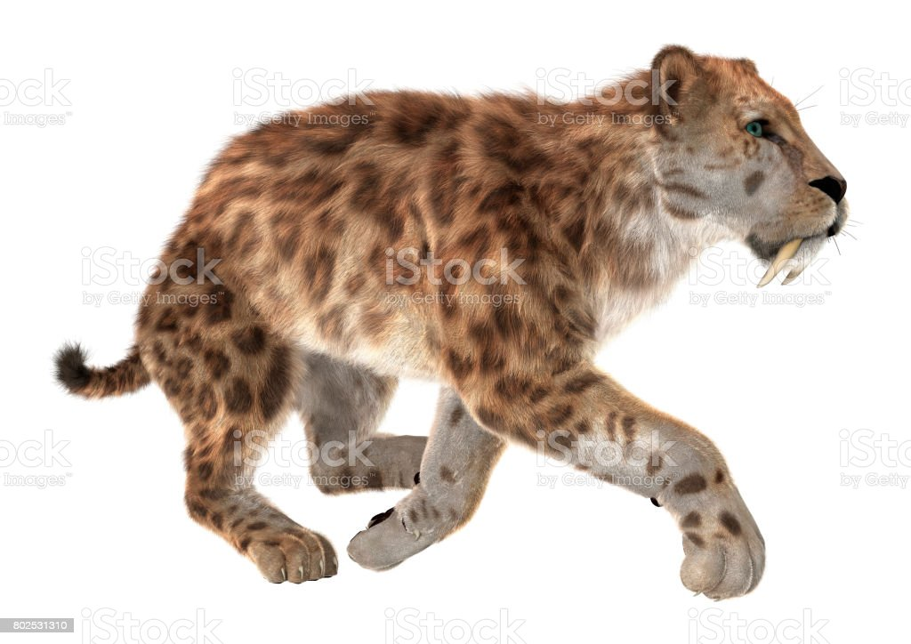 3D Rendering Smilodon or Saber Toothed Cat on White stock photo