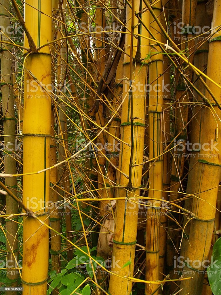 Renewable Bamboo Flooring Material stock photo