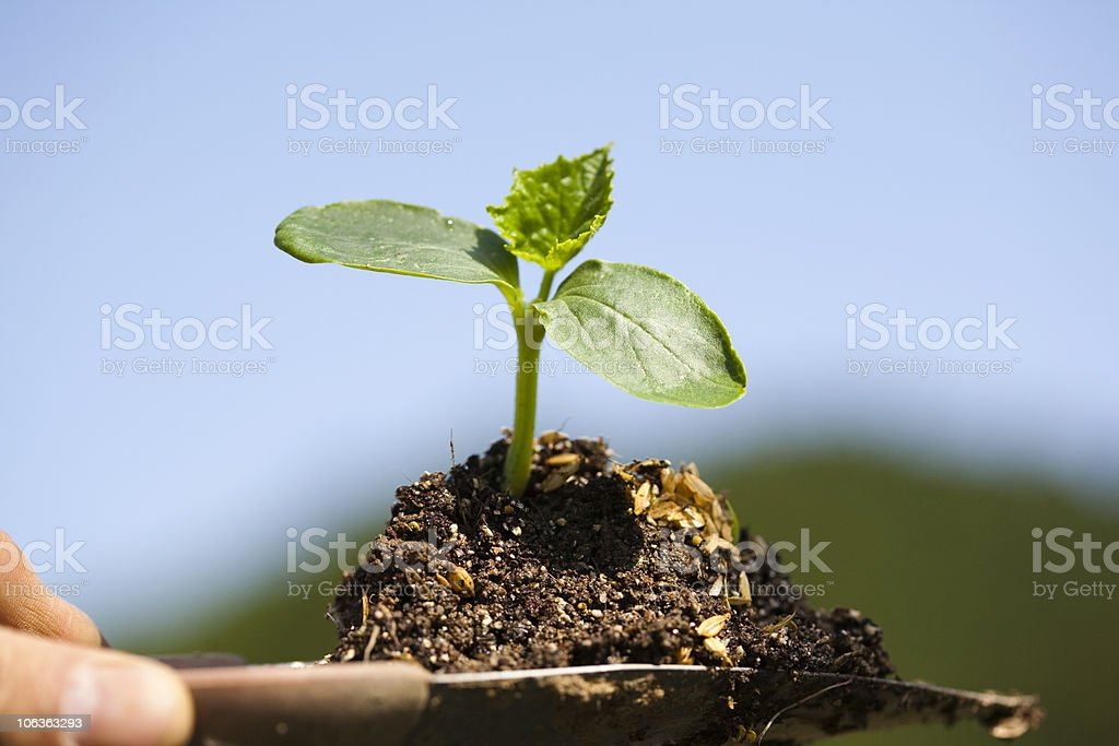 Replant with hand trowel royalty-free stock photo