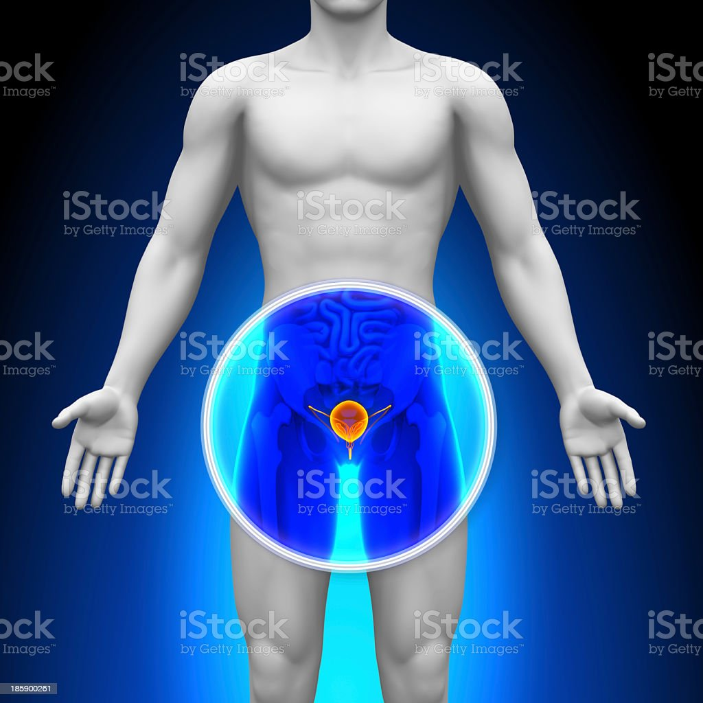 Representation of medical x-ray scan showing the prostate stock photo