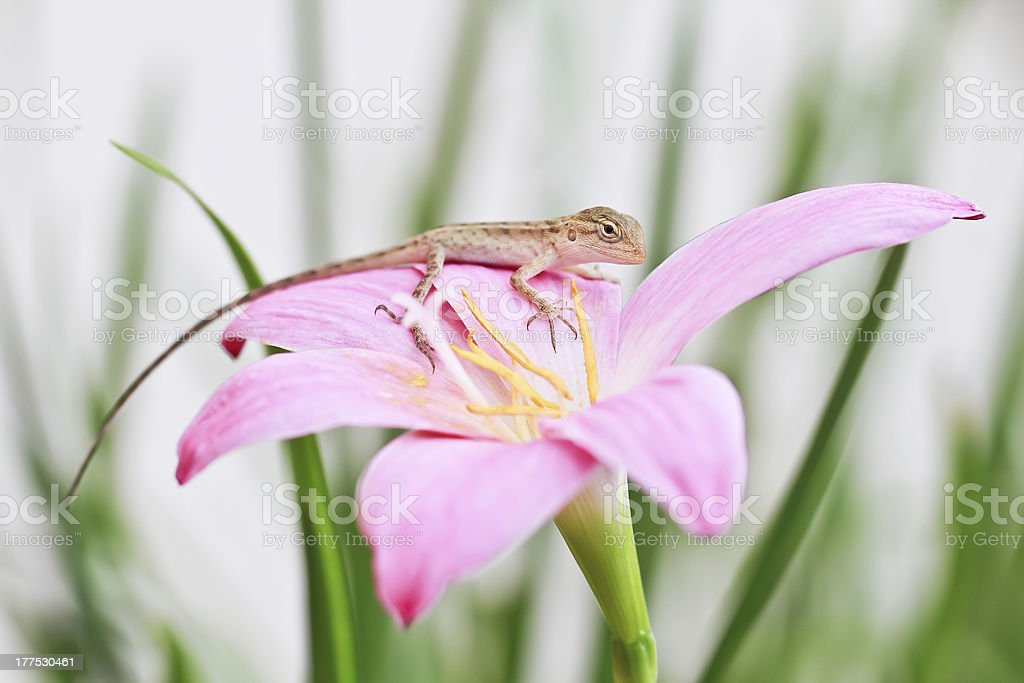 reptile on flower royalty-free stock photo