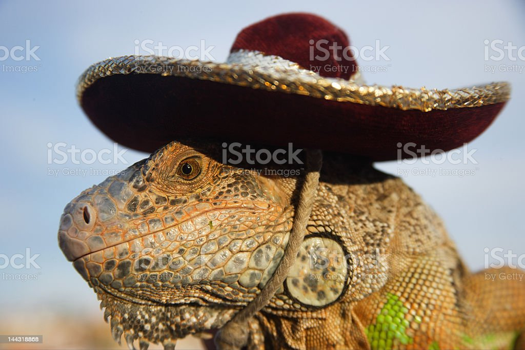 reptil royalty-free stock photo