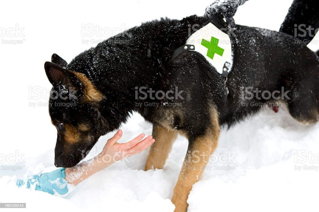 rescue dog in winter royalty-free stock photo
