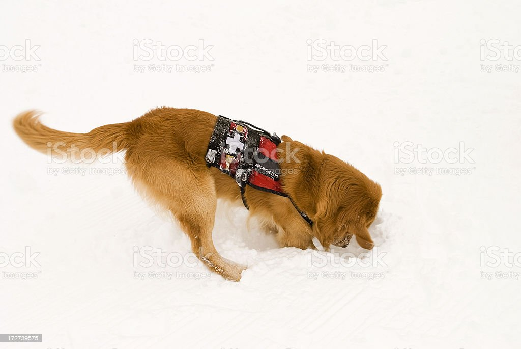 Rescue dog stock photo