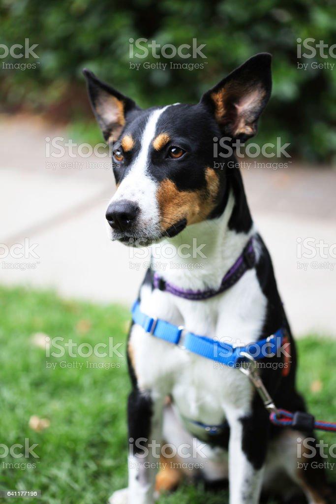 Rescue dog stock photo