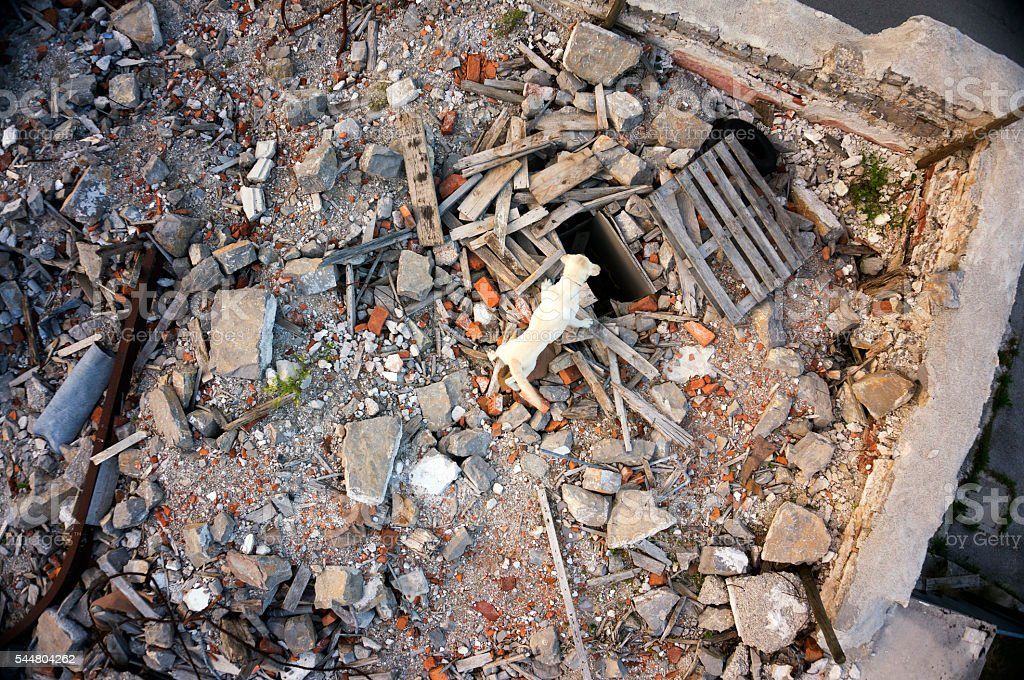 Rescue dog searching for casualties in building collapse, aerial view stock photo