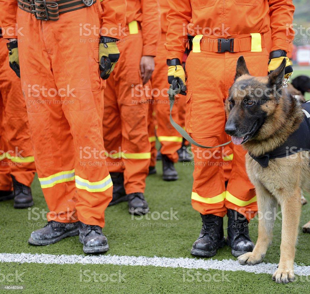 rescue dogs stock photo