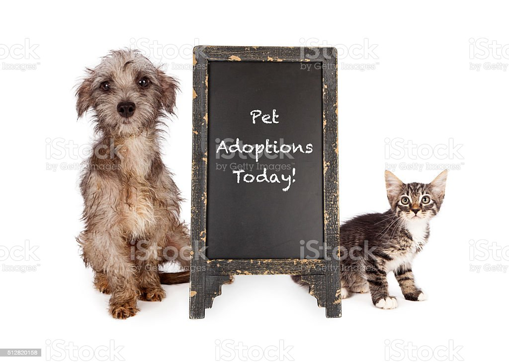 Rescue Pets With Adoption Event Sign stock photo
