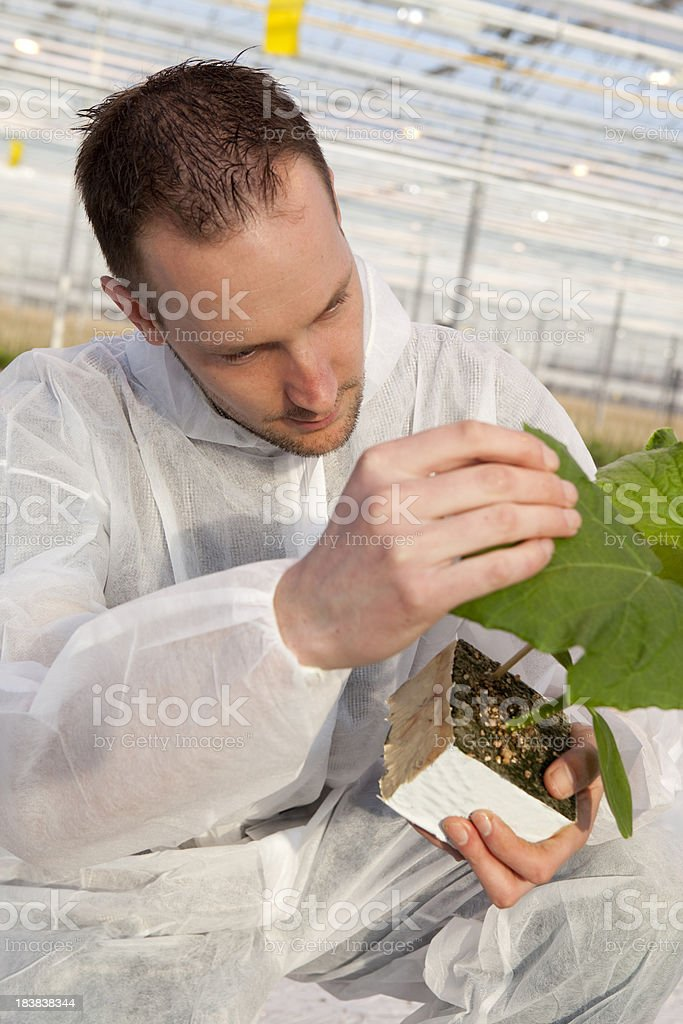 Research and genetic engineering in a greenhouse. royalty-free stock photo