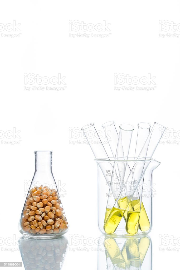 Research corn energy, biofuel and gmo in laboratory stock photo