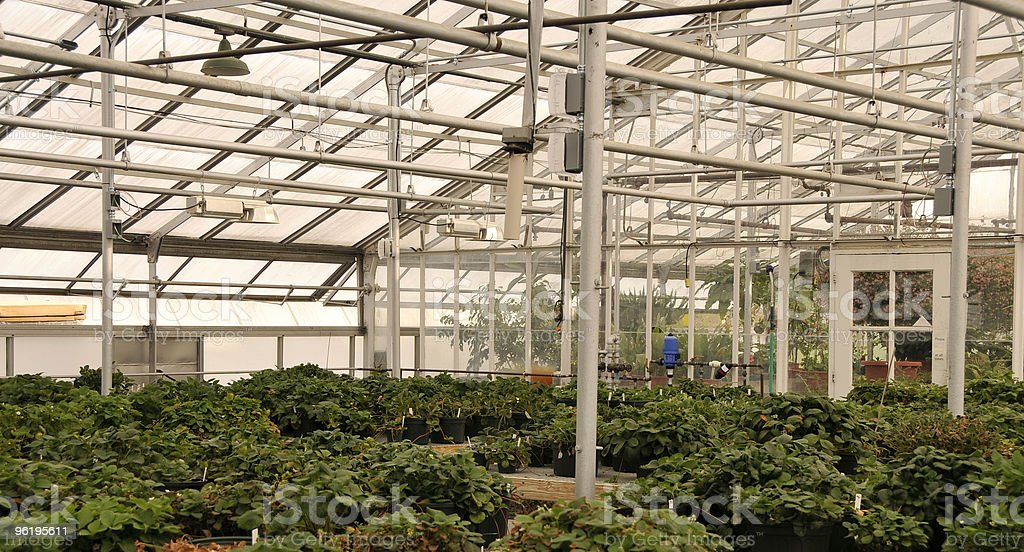 Research Greenhouse Interior royalty-free stock photo