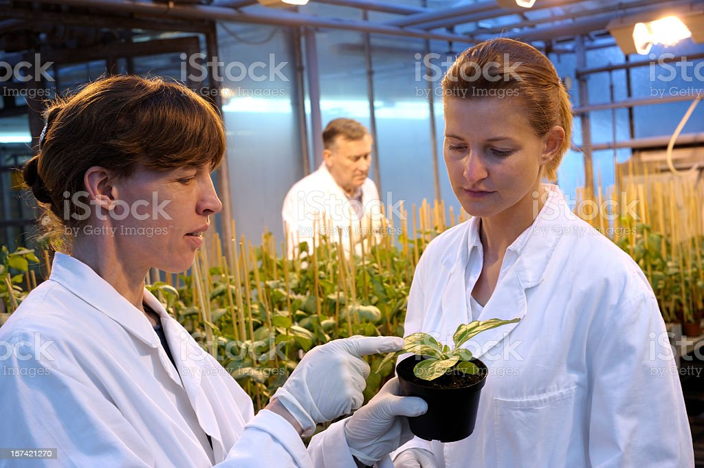Research in the greenhouse royalty-free stock photo